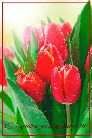 Анимация Красные тюльпаны с бабочкой (С днем рождения!)
