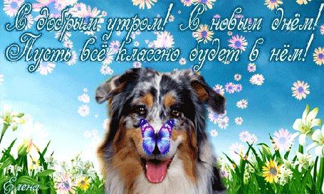 Анимация Радостный пес сидит с бабочкой на носу на фоне цветов, неба, летящих ромашек (С добрым утром! С новым днем! Пусть все классно будет в нем!) Елена