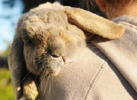 Анимация Кролик на плече человека (© zmeiy), добавлено: 18.07.2015 20:10