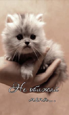 Анимация Красивый котенок на ладошке у своей хозяйки (Не обижай меня) (© qalina), добавлено: 18.07.2015 22:25