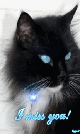 Анимация Черный кот с голубыми глазами с брелком на шее (I miss you / Скучаю по тебе) (© qalina), добавлено: 18.07.2015 22:28