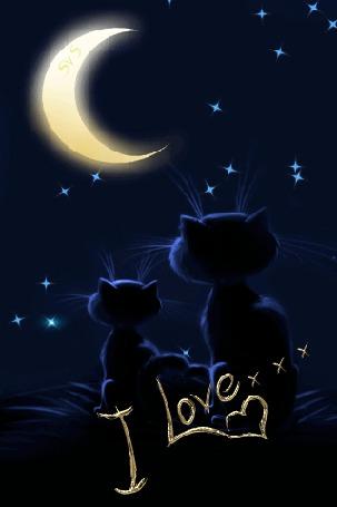 Анимация Два котенка сидят на фоне ночного неба и луны (I Love / Я люблю.) (© qalina), добавлено: 18.07.2015 22:32