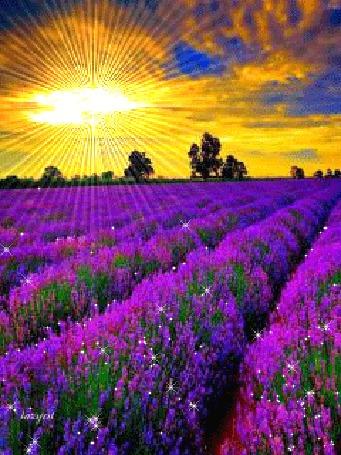 Анимация Цветочное поле на фоне солнечных лучей, облачного неба и деревьев, lazyat (© qalina), добавлено: 19.07.2015 10:18