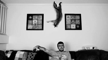 Анимация Парень сидит на диване, по потолку прыгает кот