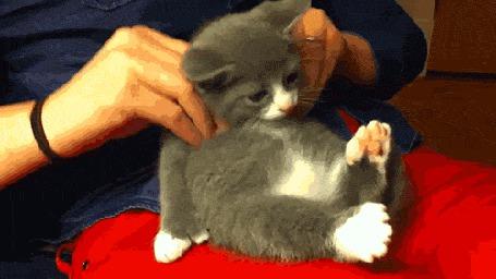 Анимация Делает массаж котенку
