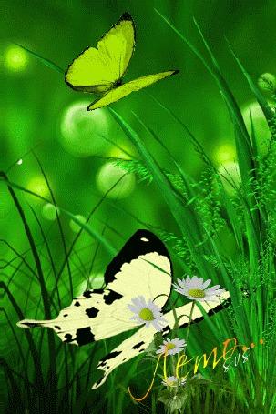 Анимация Полянка, на фоне которой летают бабочки (Лето), SVS (© qalina), добавлено: 20.07.2015 16:23