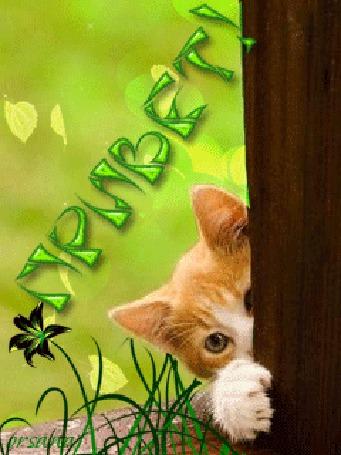 Анимация Рыжий котенок выглядывает из-за дерева на фоне цветок (Привет), Орсана (© qalina), добавлено: 20.07.2015 17:21