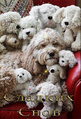 Анимация Болонка со своими щенками лежит на диване / Сладких снов