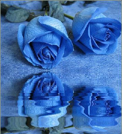 Анимация Две голубые розы у воды (© zmeiy), добавлено: 20.07.2015 18:55
