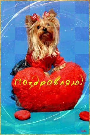 Анимация Красивая болонка с бантиком на фоне сердечка / Поздравляю / Лейла