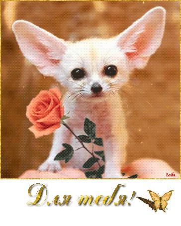 Анимация Собачка с цветком на фоне бабочки / Для тебя / Лейла/ (© qalina), добавлено: 20.07.2015 19:28