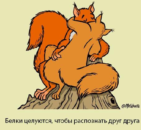 Анимация Целующиеся белки (Белки целуются, чтобы распознать друг друга) (© Arinka jini), добавлено: 22.07.2015 09:51