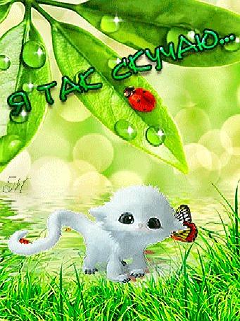 Анимация Кот Вуфтик на фоне зеленой лужайки с бабочками и листьями с каплями воды, на которых сидит божья коровка (Я так скучаю.)
