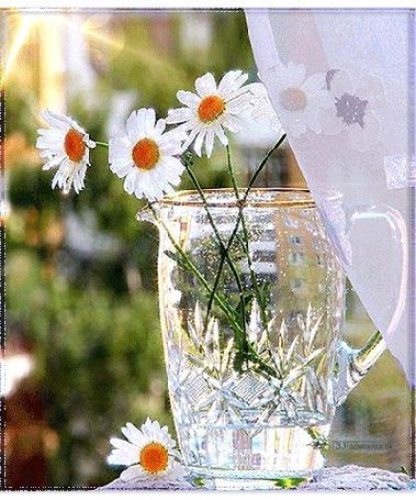 Анимация В стеклянной вазе стоят белые ромашки, через окно светят лучи солнца