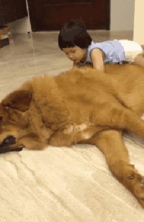 Анимация Маленькая девочка гладит пса (© zmeiy), добавлено: 24.07.2015 06:16