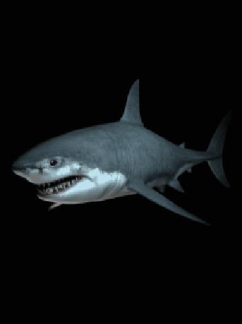 Анимация Акула на темном фоне с открытой пастью (© qalina), добавлено: 24.07.2015 17:28