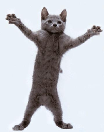 Анимация Серенький котенок танцует (© qalina), добавлено: 25.07.2015 07:47