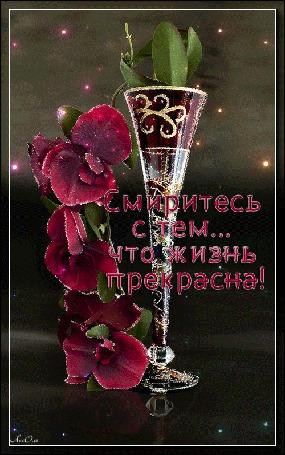 Анимация В стеклянном бокале ветка вишневой орхидеи на темном фоне (Смиритесь с тем. что жизнь прекрасна!) автор АссОль (© Natalika), добавлено: 25.07.2015 09:13