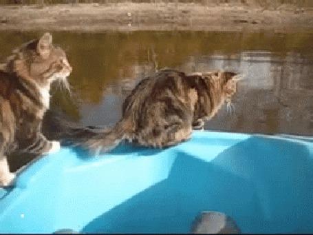 Анимация Кот прыгает с лодки в воду, решив, что так можно быстрее добраться до берега (© Anatol), добавлено: 26.07.2015 00:30