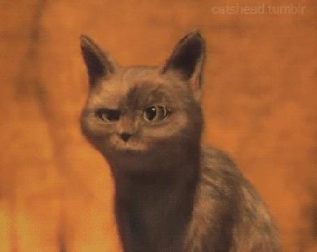 Анимация Прикольная, моргающая кошка (© JeremeVoods), добавлено: 26.07.2015 15:29