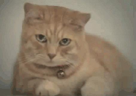 Анимация Кот с бубенчиком на ошейнике