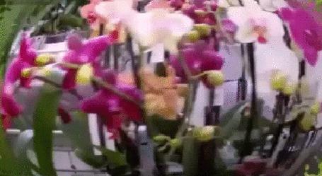 Анимация Разноцветная карусель цветов (© Георгий Тамбовцев), добавлено: 28.07.2015 11:36