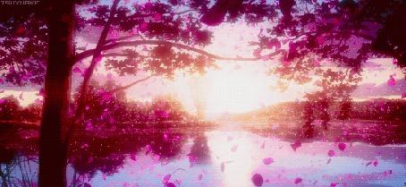 Анимация Падающие розовые листья с деревьев (© Arinka jini), добавлено: 28.07.2015 15:32