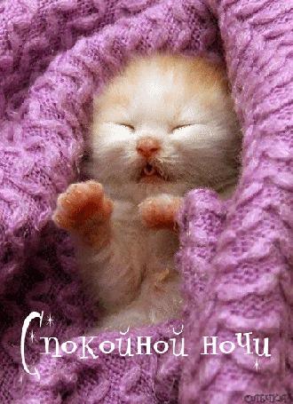 Анимация котик в шарфе Спокойной ночи/Олечка/ (© qalina), добавлено: 01.08.2015 22:53