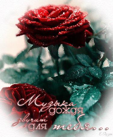 Анимация Красные розы под дождем/Музыка дождя звучит для тебя/Е Лузан/ (© qalina), добавлено: 02.08.2015 22:11