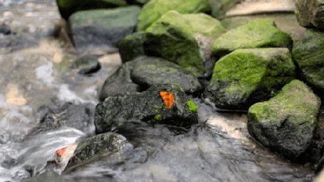 Анимация Бабочка сидит на камне, посреди реки (© Seona), добавлено: 04.08.2015 13:16