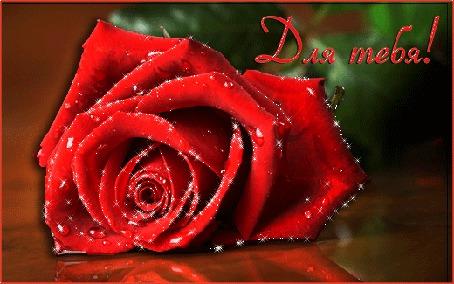 Анимация Блестящая красная роза лежит на полированной поверхности, в правом верхнем углу надпись Для тебя!