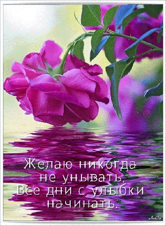 Анимация Сиреневая роза склонилась над водой (Желаю никогда не унывать, Все дни с улыбки начинать) АссОль (© Natalika), добавлено: 05.08.2015 09:09