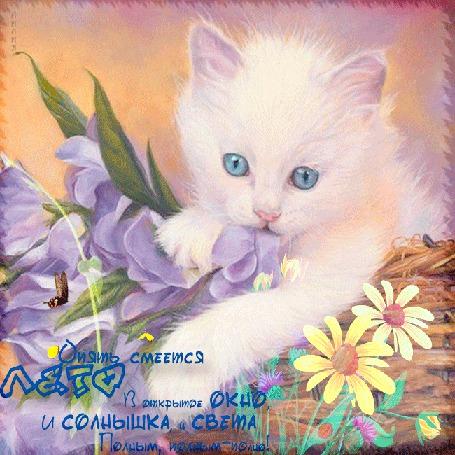 Анимация Белый голубоглазый котенок в корзине на цветах с бабочками (Опять смеется лето В открытое окно, и солнышка и света Полным, полным-полно) Лилия