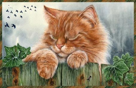 Анимация Рыжий кот на фоне неба и перелетных птиц (© qalina), добавлено: 06.08.2015 17:08