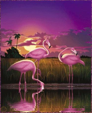 Анимация Розовые фламинго на фоне заката с отражением в воде