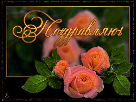 Анимация Розовые розы (Поздравляю) (© qalina), добавлено: 06.08.2015 17:42