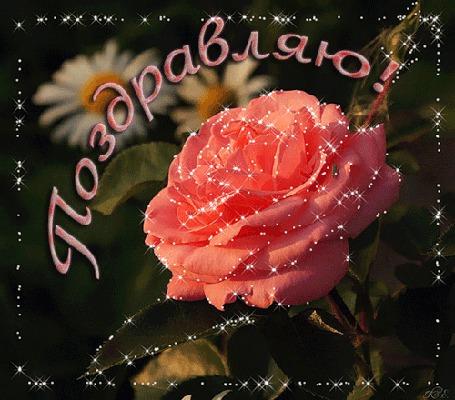 Анимация Роза на фоне ромашек (Поздравляю) (© qalina), добавлено: 06.08.2015 17:52