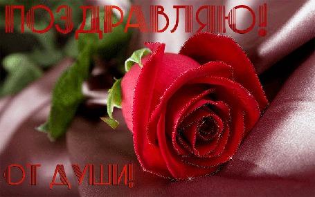 Анимация Красная роза (Поздравляю от души) (© qalina), добавлено: 06.08.2015 17:54