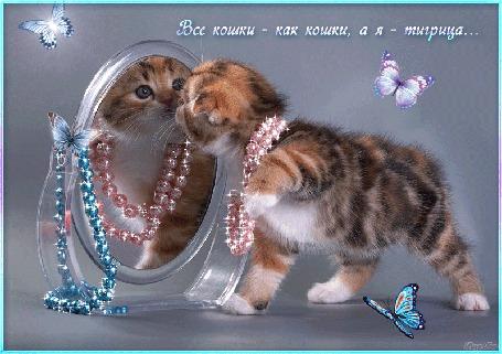Анимация Котенок с бусами на шее смотрится в зеркало на фоне бабочек (Все кошки-как кошки а я-тигрица)