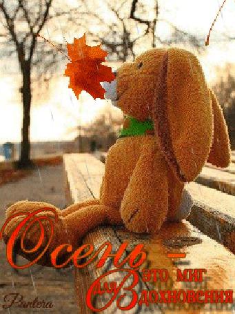 Анимация Плюшевый зайка сидит на скамейке под дождем и падающих листьев (Осень-это миг для вдохновения) , автор Пантера (© qalina), добавлено: 06.08.2015 21:58