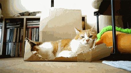 Анимация Кот остается спокойным и невозмутимым, даже когда ему падает на голову лист картона, скинутый сверху другим котом