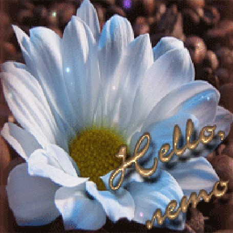 Анимация Красивая белая ромашка (Hello лето / привет лето) (© qalina), добавлено: 07.08.2015 19:25