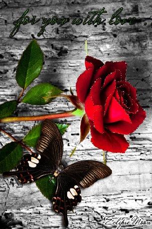 Анимация Красная роза и бабочка / for you loith love / Edipse moon/ (© qalina), добавлено: 07.08.2015 21:32