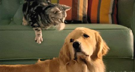 Анимация Кошка гладит собаку (© phlint), добавлено: 08.08.2015 08:30