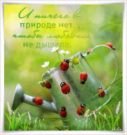Анимация Божьи коровки облепили лейку с цветами (И ничего в природе нет, чтобы любовью не дышало) АссОль