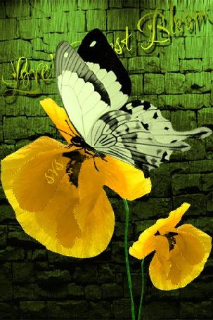 Анимация Бабочка сидит на желтом цветке под дождем (Loves First Bloom), автор SVS