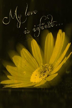 Анимация Ромашка под дождем (My Love is infinite / Моя любовь бесконечна), автор Pantera (© qalina), добавлено: 08.08.2015 14:28