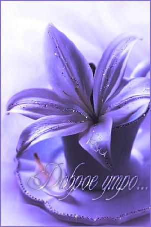 Анимация Красивая лилия в чашечке / Доброе утро / KSU/ (© qalina), добавлено: 08.08.2015 17:26