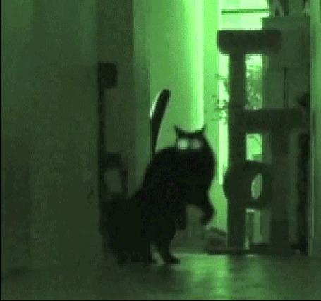 Анимация Черный кот с светящимися глазами скачет по коридору в тусклом зеленом свете