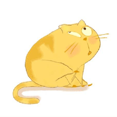 Анимация кота рыжего